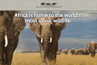 AWF Infographic image